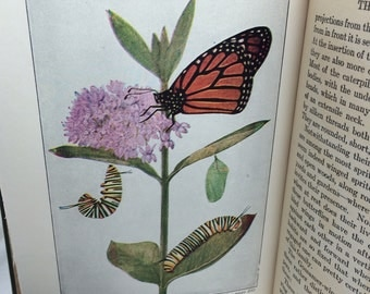 The Book of Butterflies, Butterflies Worth Knowing, Clarence Reed, vintage butterfly guide, butterfly lover gift, Gift for Mom, Mother's Day