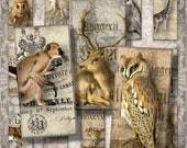 """Last Call Zoological - 1x2"""" Dominoes - Digital Collage Sheet (045) - instant download"""