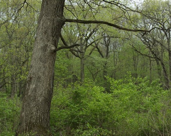 Nature Photography - Forest Photography -