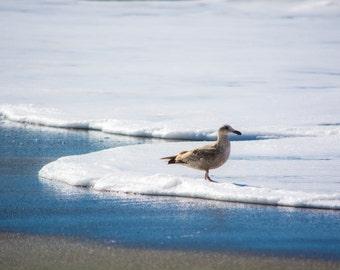 The Bird, California Coast, Ocean