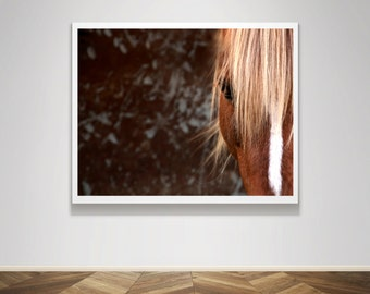 Photograph - Horse Haflinger Pony Cross Eye Mane Brown - Fine Art Photography Print Wall Art Home Decor