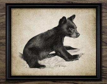 Black Bear Cub Print - Black Bear Illustration - Black Bear Decor - Digital Art - Printable Art - Single Print #634 - INSTANT DOWNLOAD