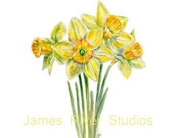 Daffodil Watercolor Painting Daffodil Art Print. Daffodil Painting Daffodil Print Yellow Flower Art Print Flower Painting Flower Wall Decor.