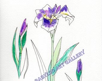 Iris - Ink Drawing