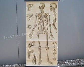 Vintage school wall Pull Down Chart Map of the Human Skeleton  - Anatomy