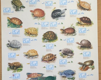 Hobby Poster Chart Turtles And Tortoises Poster 27 x 39 made in Italy