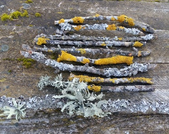 wood branches twigs with lichen moss yellow gray art crafts terrarium supply bonsai natural woodland rustic home decor fireplace centerpiece