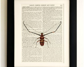 ART PRINT on old antique book page - Insect, Beetle, Vintage Upcycled Wall Art Print, Encyclopaedia Dictionary Page, Fab Gift!