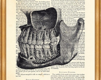Tooth print, Tooth Anatomy, Vintage Anatomy Human Drawing DICTIONARY ART PRINT on Vintage Dictionary Page 8'' x 10'' from up-cycled book
