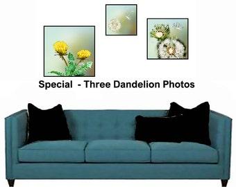 Dandelion Wall Art,Dandelion Art SPECIAL,Dandelion Photography,Dandelion Photo,Dandelion Photo Wall Art,Dandelion Photography,Art Photograph
