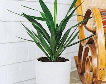 Planter | Concrete Planter | Planter | Cement Pot | Indoor Planter |  Concrete House Planter