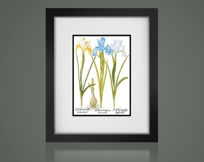 FRAMED BOTANICAL PRINT - Free Shipping - Matted And Framed botanical Print, Gallery Wall Art, Framed Antique Print, Black Or  White Frames