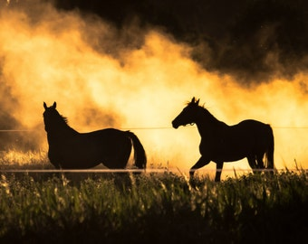 Wild Horses Photography, Panorama Print, Dirgital Download, Horse Fine Art - Wild horses running into sunset
