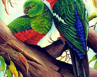 The King and I - King Parrots