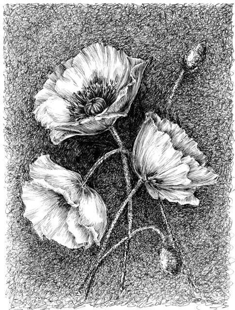 Poppy Wall Art Original Artwork Flower Drawings Poppy