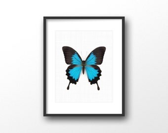 Blue Morpho butterfly print - Morpho butterfly photography print - Modern minimalist home decor - Butterfly art - Printable women gift