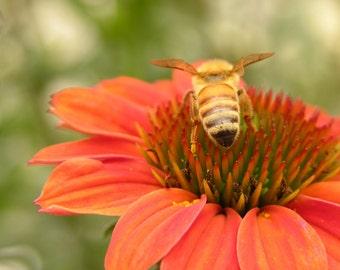 Bee On Orange Flower #599