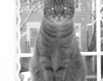 Cat Portrait In Black and White Photograph