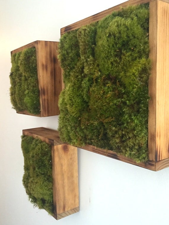 Living Moss Wall Garden Vertical Moss Garden In Reclaimed
