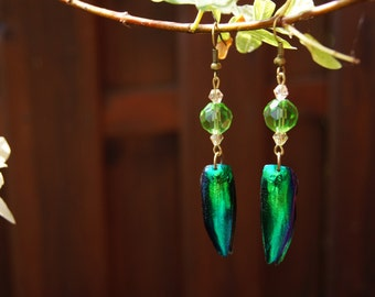 Earrings with Jewel Beetle Wings (Elytra)