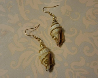Sea shell dangle earrings wrapped with gold wire