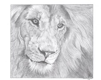 MALE LION (1) Limited Edition art drawing print signed by UK artist
