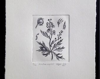 Monkshood (Aconite) Original Fine Art Etching Print (Editioned Botanical Illustration)