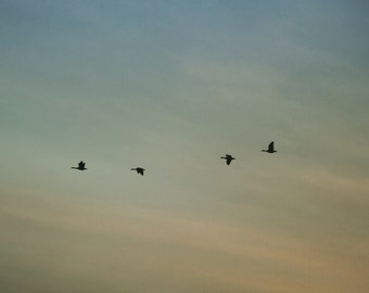 Birds in Flight, bird photography, birds flying, dawn, sunrise, photography, toronto, toronto photography, birds in flight, home decor