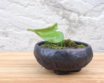 Miniature black ceramic bonsai, cactus, succulent planter No6