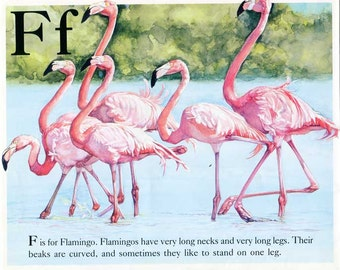 Vintage 1980's Bird Alphabet Book Child's Bookplate Illustration, Print for Framing, F for Flamingo, Bird Print, Flamingo Print