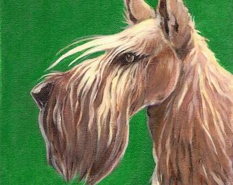 Wheaten scottish terrier - original acrylic painting on canvas