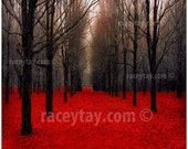 Red & Black Forest- Nature Photography Rustic Decor- Fall Forest - Fiery Autumn