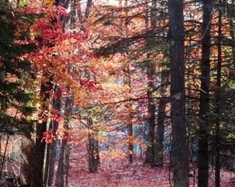 Autumn Photography, Autumn Landscape Photo, Autumn Leaves Photo, Fall Landscape Photo, Fall Foliage, Autumn Scenery, Autumn Decor