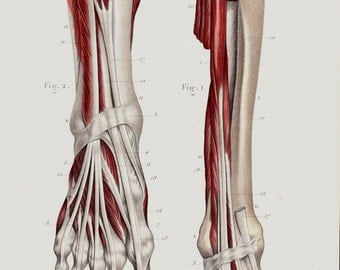 Antique print 1853 Antique ANATOMY print, fine anatomy lithograph, human feet, foot, muscles, veins, arteries, muscular system, bones