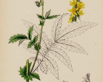 1873 Antique BOTANICAL print, vintage botanical, yellow flower art print, plants and herbs, original vintage lithograph. fragrant agrimony