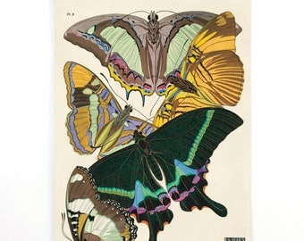 Butterfly Illustration Poster - Vintage Pull Down Chart - Reproduction. French Seguy Plate 8 Butterflies Diagram. Entomology CP273cv