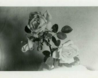 "Vintage Photo ""The Queen's Rose"" Still Life Flower Snapshot Photo Old Photo Black & White Photograph Found Paper Ephemera Vernacular - 76"