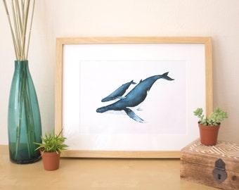Whale Art Print | Humpback whale watercolor illustration