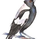Magpie watercolour painting print, Australian Magpie painting, magpie watercolour, A3 size, M10816, black bird print