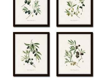 Antique Olive Print Set No. 1, Collage, Botanical Prints, Kitchen Art, French Decor, Giclee, Botanical Illustration, Wall Art, Print