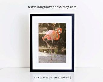 Sleeping Pink Flamingo Photo, Tropical Bird Photography, Coral Feathers, Nautical Beach Coastal Florida Decor, Home Wall Art, Nature Print