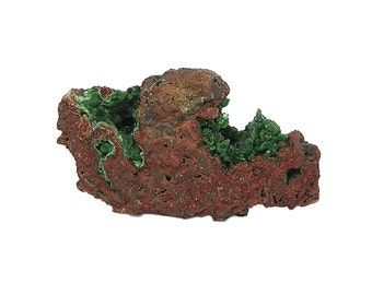 Austinite Rare Green Natural Botryoidal Crystalline Mineral on limonite rock matrix Specimen mined in Mexico Geology Earth Stone Crystal