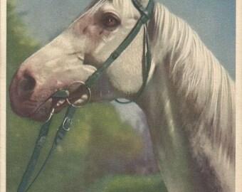 A Stately Grey - Vintage 1940s Photochrome Bridled Horse Postcard