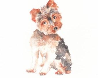 Dog, dog print, animal print, giclee, art, Watercolor, watercolor art print, TERRIER---Original watercolor giclee print 6x8