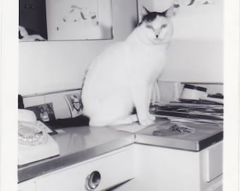 Antique Snapshot Photo of Cat With a Dont Care Attitude Posing for Camera