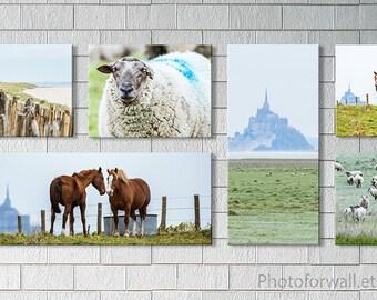Mont St Michel Beach canvas photography, horse photography, horses sheep, bedroom decor, nautical decor, Bathroom Decor, large wall art