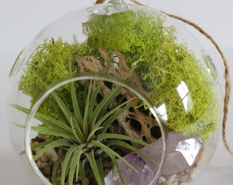 Terrarium Kit - Air Plant and Amethyst Crystal Point with Natural Pebbles, Small - Peaceful // Zen