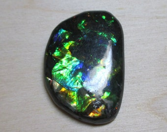 Stunning 18.33ct Natural Ammonite Ammolite Loose Stone-Marvelous bright Colors!