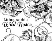 Floral Clipart, Wild Roses Lithographs, Vintage Clipart, Rose Clipart, Floral Roses, Ink Drawing Printmaking Wild Roses, Rose Crosshatching