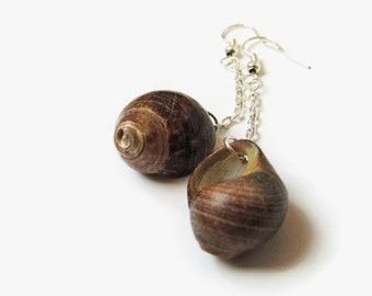 Polished common periwinkle earrings, Sea shell dangle earring, Real shell dangles, Dark brown shell english beach find, Beach themed jewelry